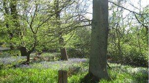 Spring woodland at the University of Edinburgh