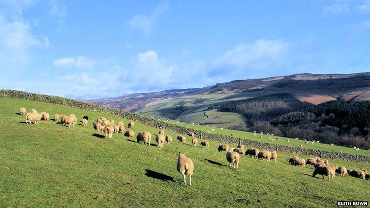 Sheep near Ladybower Reservoir