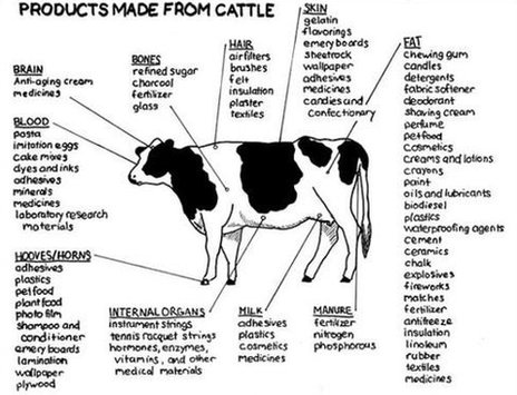 A long list of products made from cattle