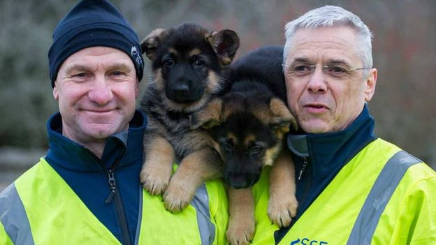 Dogs rescued by SSE engineers