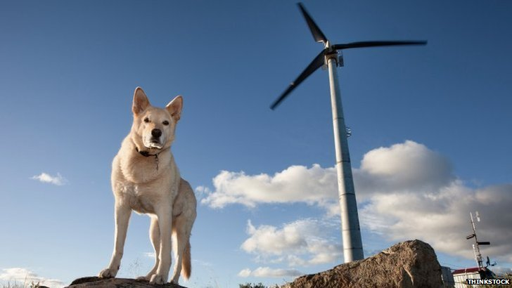 Dog and wind turbine