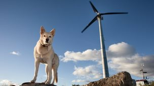A dog and a wind turbine