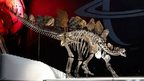 Sophie Stegosaurus