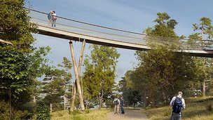 Artist's impression of treetop walkway at Westonbirt Arboretum