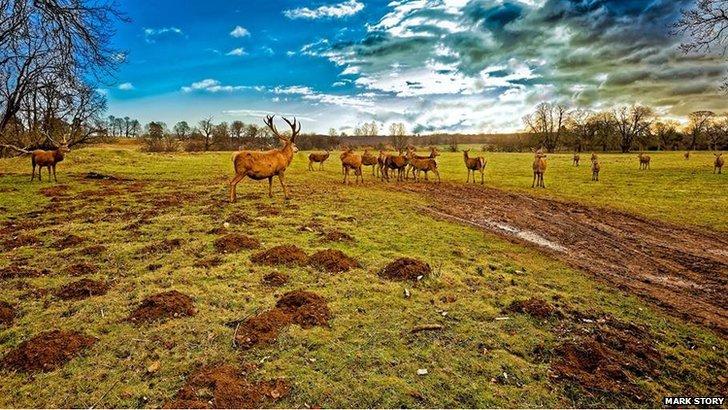 Deer at Calke