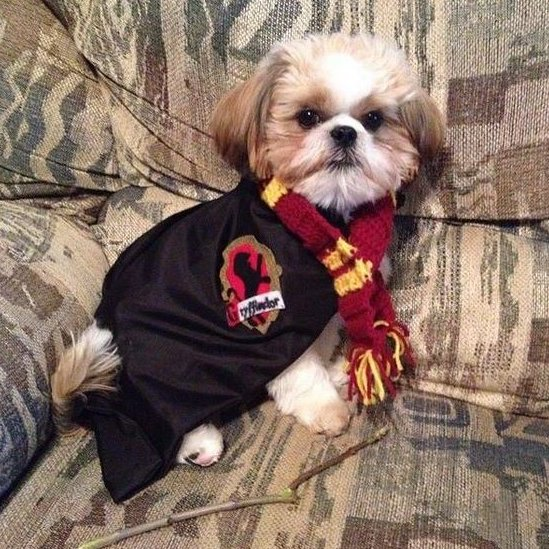 J K Rowling dog