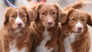 Dogs arrive for day one of Crufts 2015 at the NEC, Birmingham
