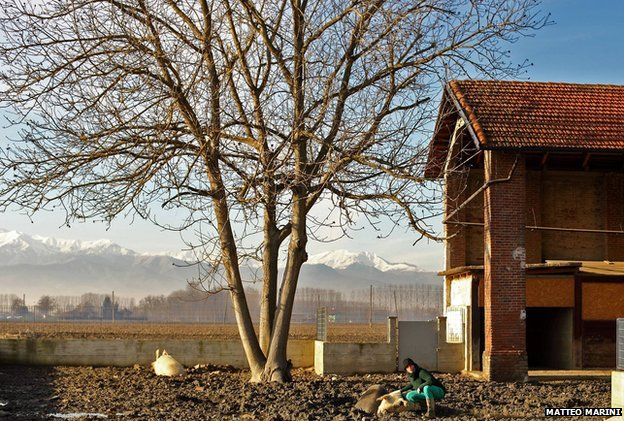 The farm, with the Alps in the background