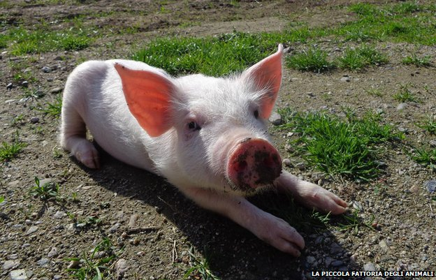 A piglet called Sophie