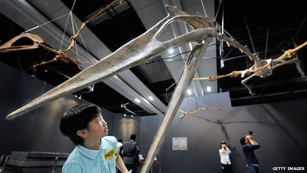 A replica Quetzalcoatlus skeleton of Quetzalcoatlus at the National Museum of Emerging Science and Innovation in Tokyo in June 2008