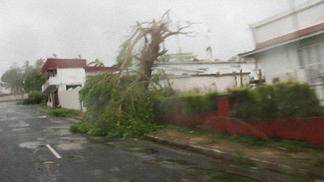 An upturned tree