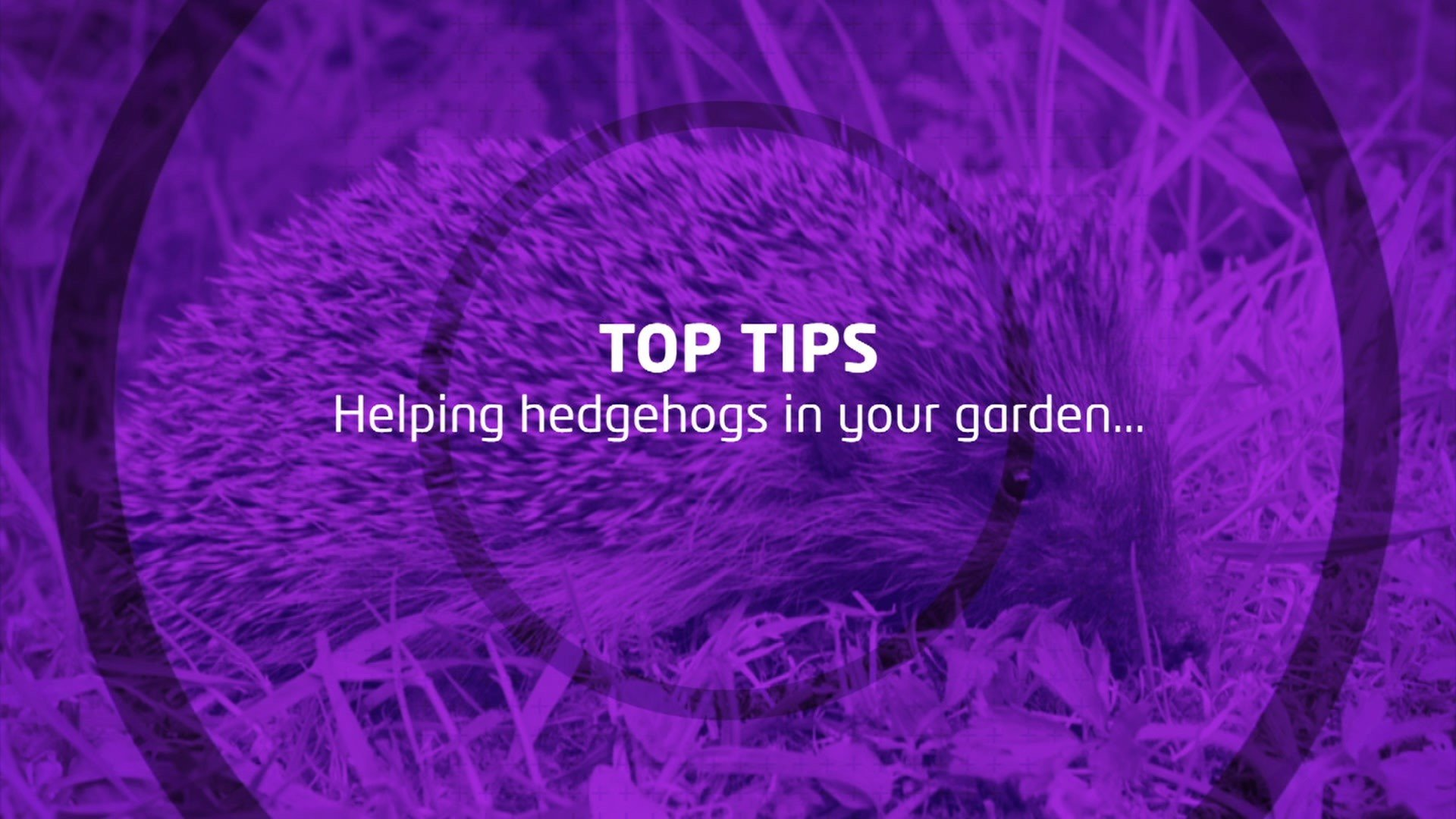 Top Tips For Looking After A Hedgehog Cbbc Newsround