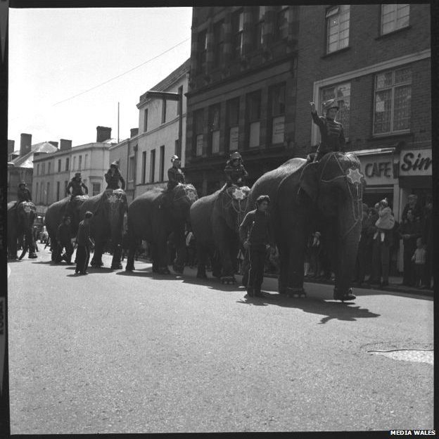 Elephants from Cottle's circus