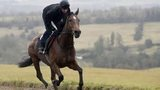 The New One being ridden out on the gallops in Gloucestershire in February 2015