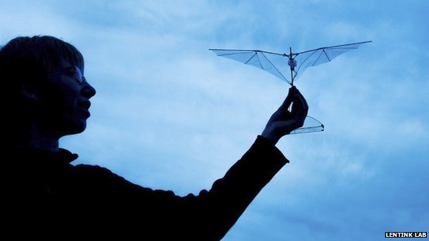 Researcher with the new flexible-winged drone (c) Lentink Lab