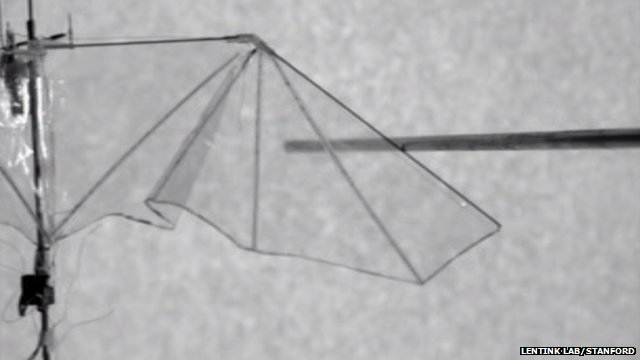 Flexible drone wing (c) Lentink Lab, Stanford University