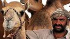 Camel trader in Al Ain camel market