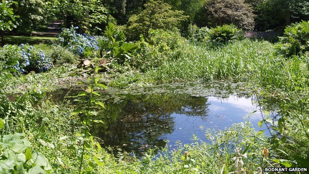 'Otter Pond'