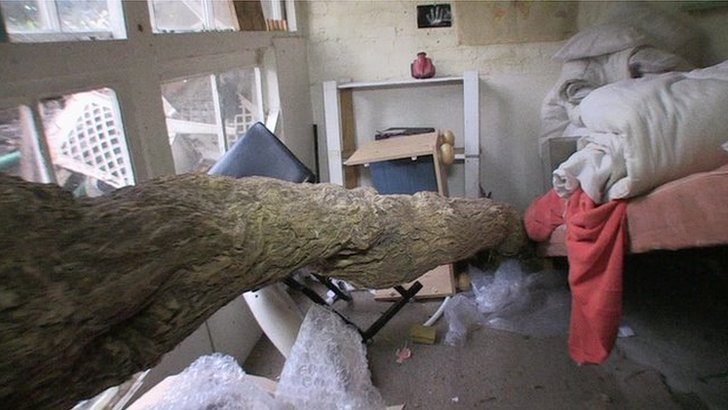 A tree trunk running through a bedroom