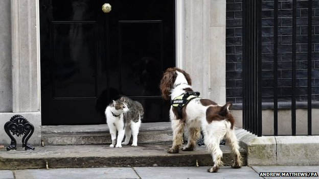 Downing Street cat Larry and police sniffer dog Bailey meet on the steps of 10 Downing Street
