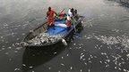 Rubbish collectors remove dead fish from the lake in Rio de Janeiro, Brazil