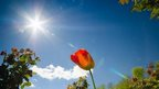 The sun shines brightly in a clear blue sky. An orange flower can be seen near the centre of the photo