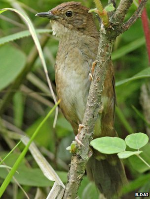 Song heralds arrival of new bird species