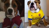 FA Cup dogs