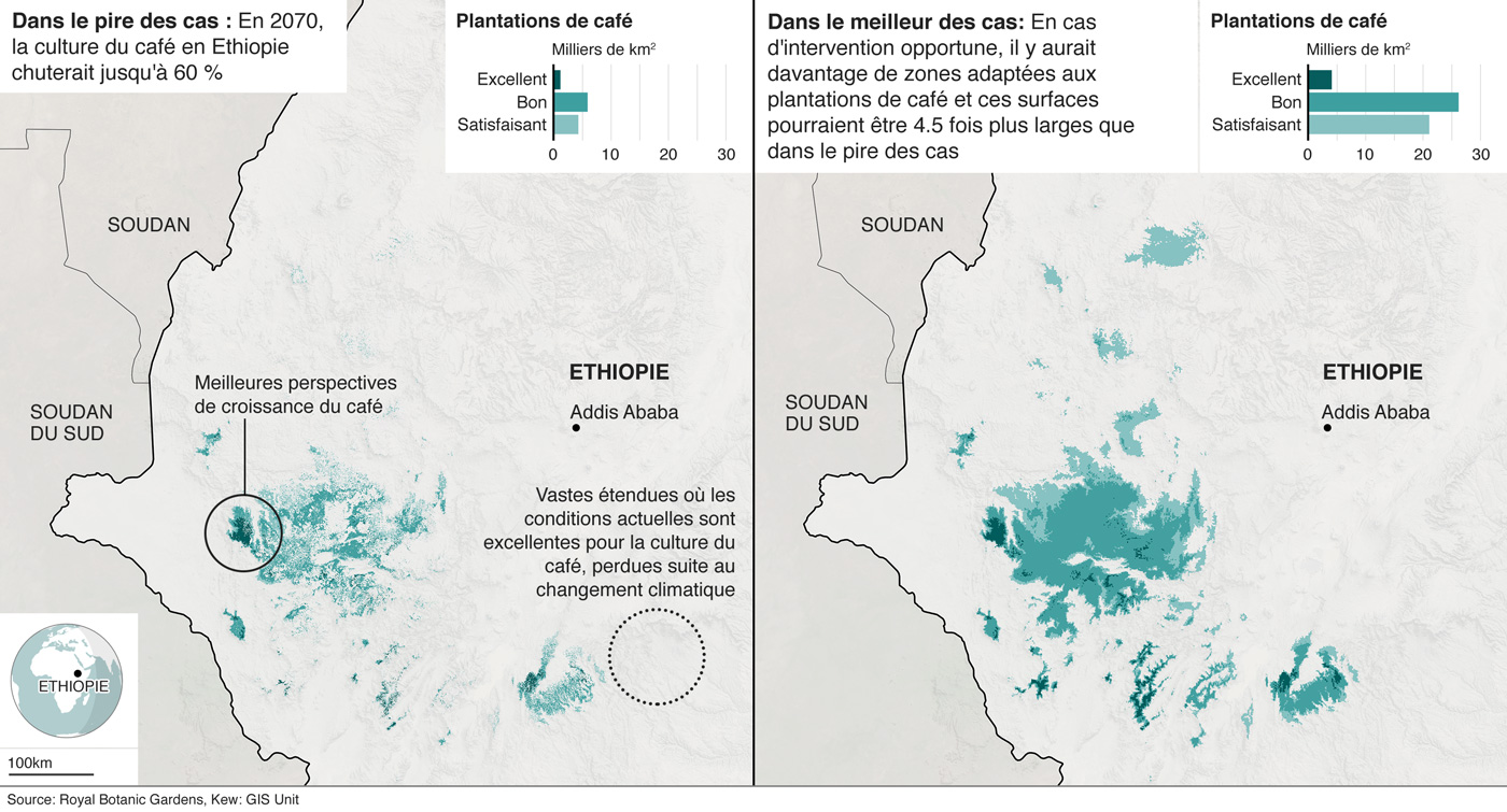 Les cartes montrent le changement de terres propices à la croissance du café en Éthiopie, d'après l'étude de Kew Gardens