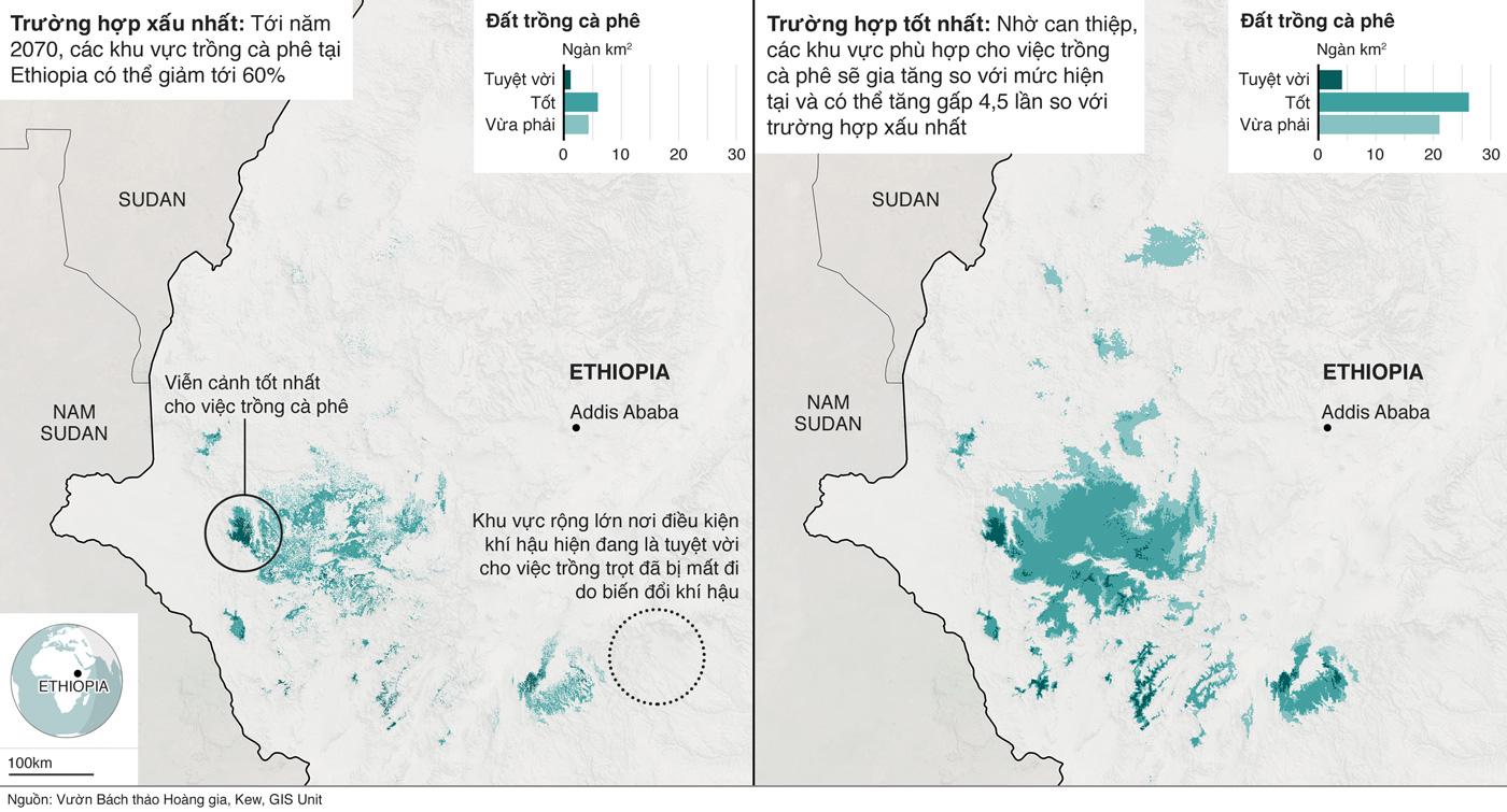 Bản đồ cho thấy thay đổi về đất đai phù hợp cho việc trồng cà phê ở Ethiopia dựa trên nghiên cứu của Vườn bách thảo Kew.