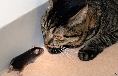 Mouse and cat (AP)