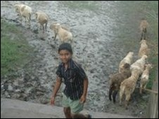 sheep being herded into muddy fields