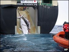 Japanese whaling ship hauls two minke whales on board (file image)