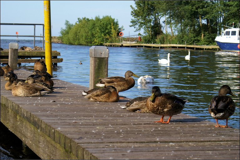 Image result for lough neagh antrim