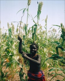 African child in field of sorghum