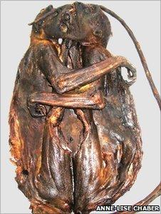 Primate bushmeat (Image: Anne-Lise Chaber)