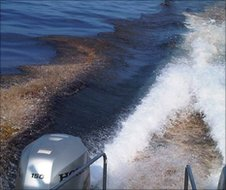 Oil in the wake of a powerboat in the Gulf of Mexico