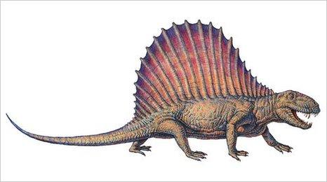 Dimetrodon (SPL)