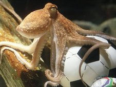 File photograph of Paul the psychic octopus