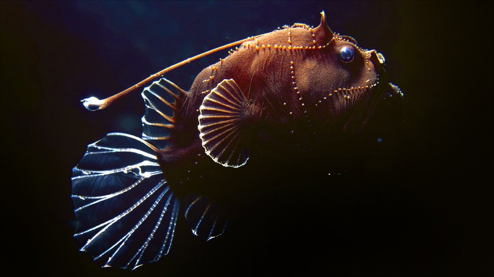 BBC News - In pictures: Unusual sea creatures found on