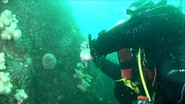 Divers work off the Pembrokeshire coast