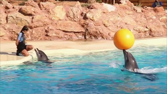 Dolphins at the Attica Zoological Park in Greece