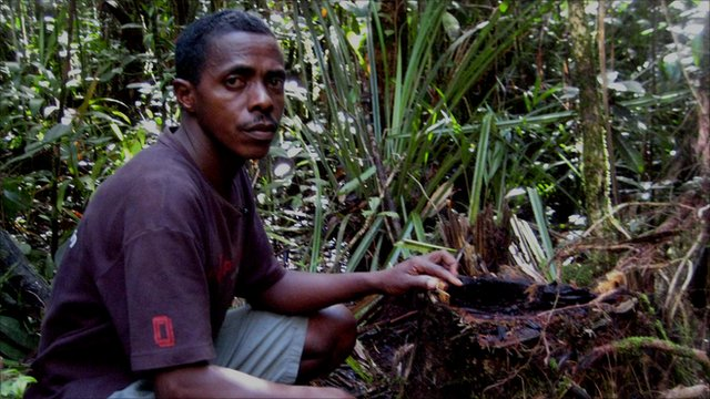 Guide Armand Marozafy on illegally logged trees in Madagascar.