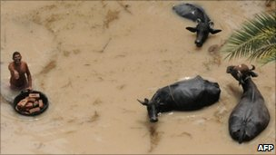 Aerial view from a Pakistan army rescue helicopter shows a resident with cattle in a flood-affected area of Ghouspur about 100 kilometers from Sukkur on August 9, 2010