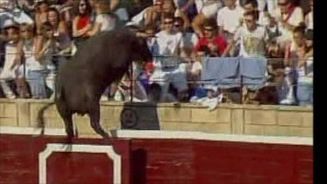 bull jumps arena fence