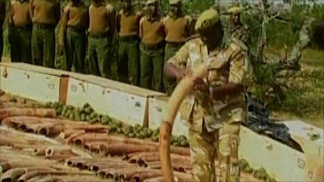 Kenya ivory haul