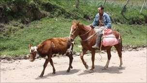 Cattle farmer on horse