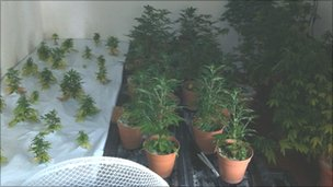 Cannabis plants found at property in Minster