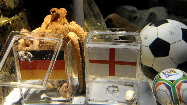 https://news.bbcimg.co.uk/media/images/49659000/jpg/_49659323_octopus.jpg