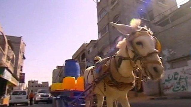 Donkey pulling cart